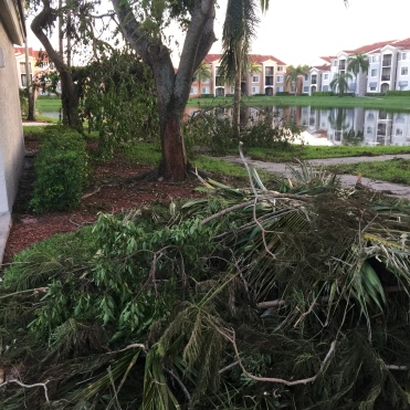 Fallen trees in our complex
